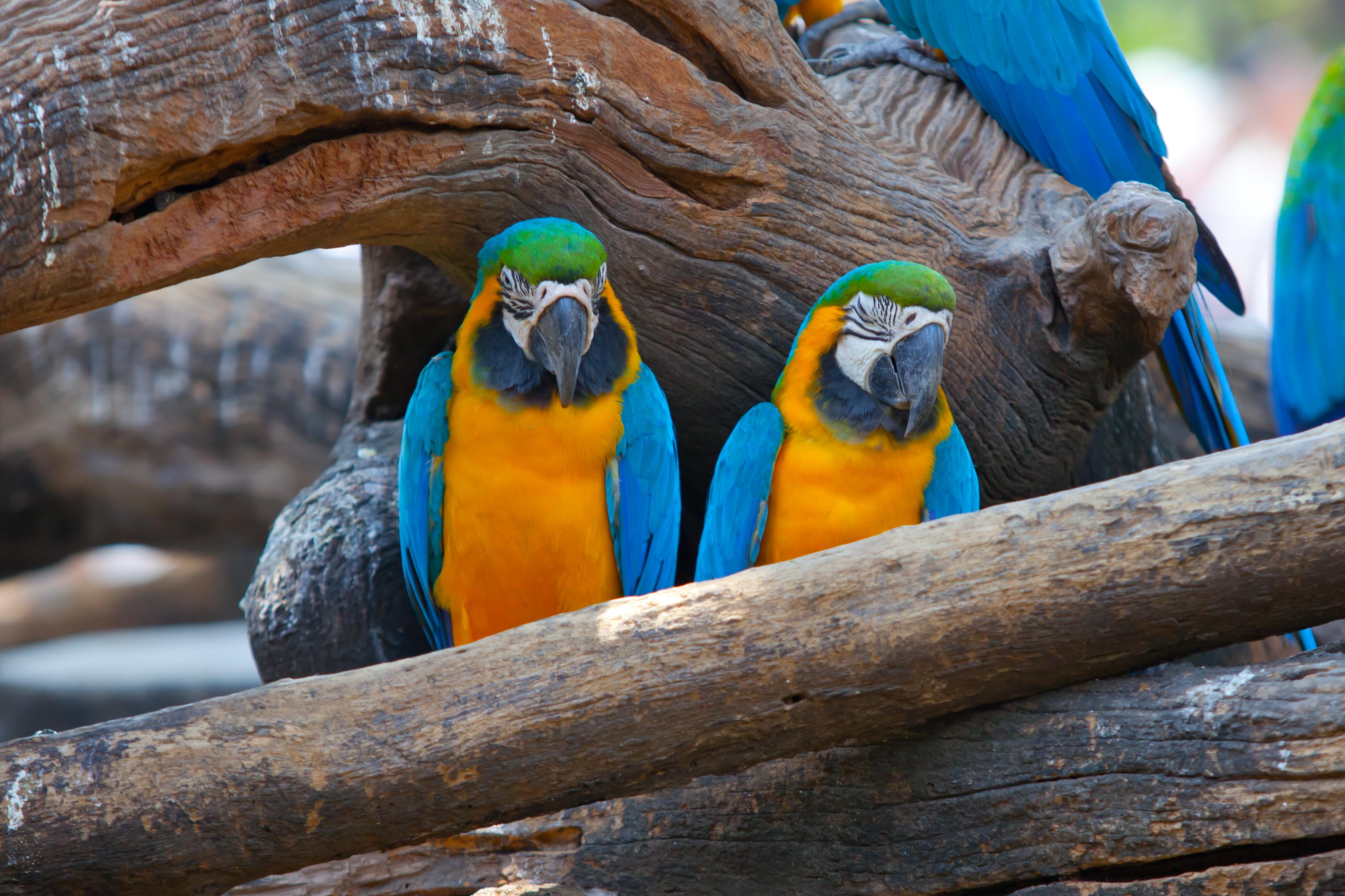 A Bird Watcher's Itinerary in Costa Rica