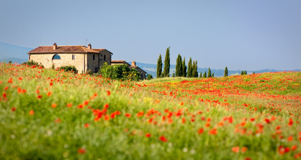 Typical tuscan house with red dots of poppies in the foreground. European Spring Blooms